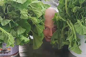 Zucchina Serpente di Sicilia