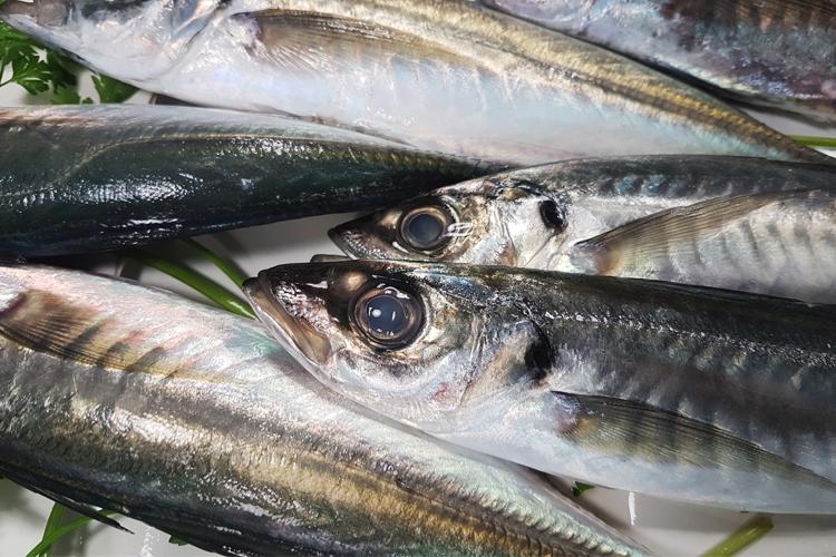 pesce pescato da qualche giorno